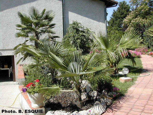 Envie d'un petit coin de jardin exotique Massif