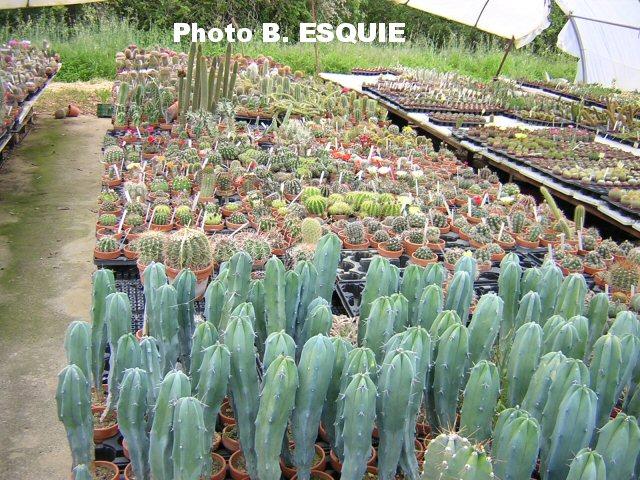 O acheter toutes les plantes rares exotiques et palmiers for Acheter les plantes
